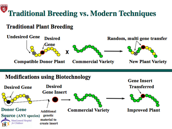 Biotechnology/genetic engineering is more precise in selecting desirable crop traits