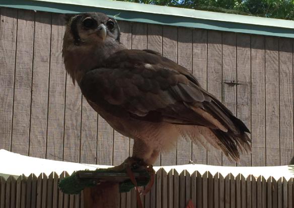 Zoo Atlanta 2016