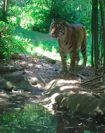 Atlanta Zoo 2016