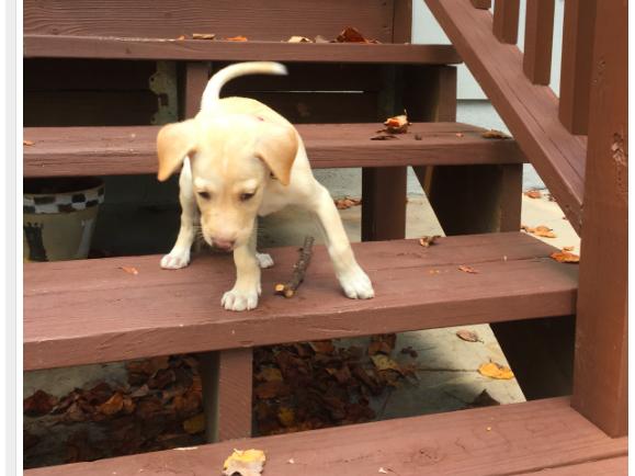 New Family Member: Charlie!