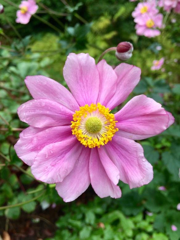 gardenpic