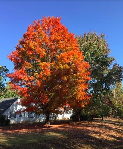 Neighborhood tree a few weeks ago